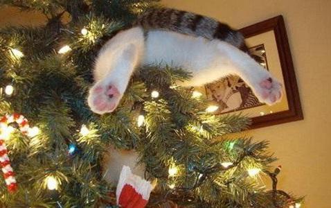 catschristmastrees2