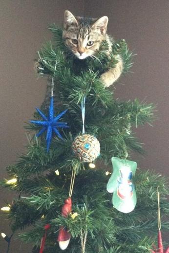 catschristmastrees3