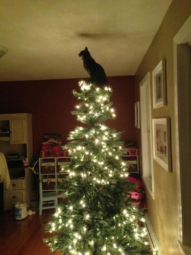catschristmastrees4