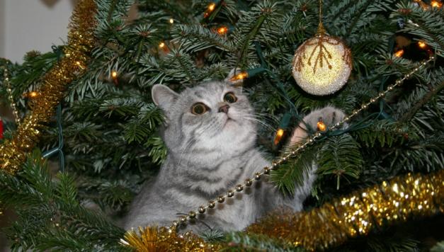 catschristmastrees6