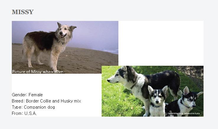 dogCloning2