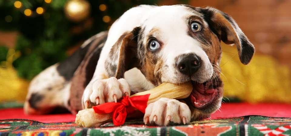 christmasdog1